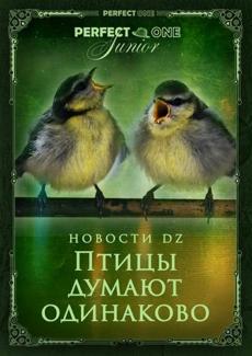 Птицы «думают» одинаково, когда поют дуэтом